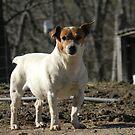 Woof Woof  by MsLynn