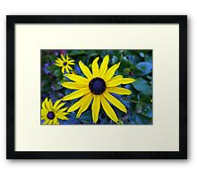 beautiful yellow daisy flower photography, Framed Print