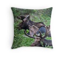Bull Moose 2 Throw Pillow