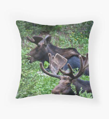 Bull Moose 2 Throw Pillow