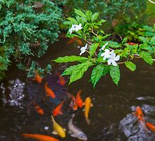 Fish in Nature by Adrian Alford Photography