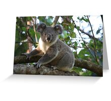 Baby Koala In Our Tree Greeting Card