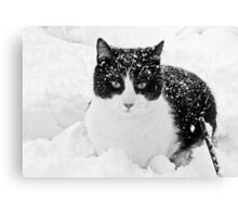 Snow Kitty Black & White Canvas Print