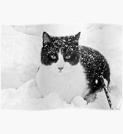 Snow Kitty Black & White Poster