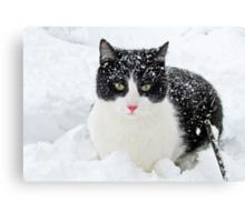 Snow Kitty Canvas Print