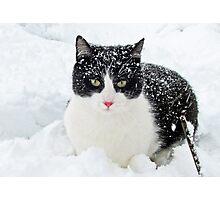 Snow Kitty Photographic Print