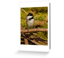 Brush Pile Chickadee Greeting Card
