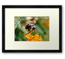 Hungry Eater Framed Print