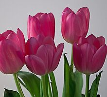 Raising our Tulip Family by Sherry Hallemeier