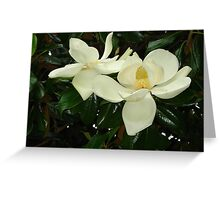 Magnolia blossom 2 Greeting Card