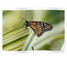 monarch butterfly 6 Poster