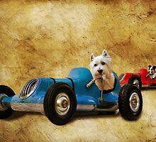 K9 Racers by Steven  Agius