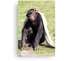 Chilled Chimp Canvas Print