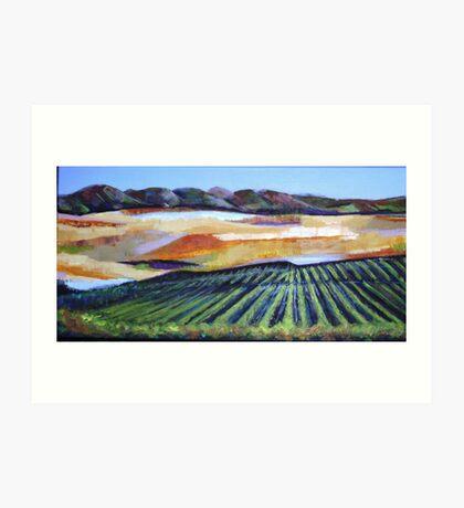 The Vineyard in a New Light Art Print