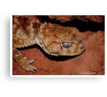 Lovely gecko Canvas Print