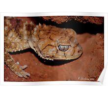 Lovely gecko Poster