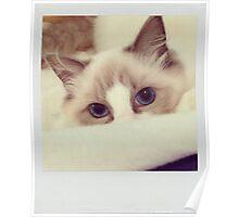Hide and Seek Cat Poster