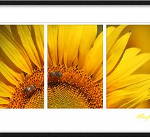 Sunny Sunflower by Kym Howard