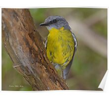 """"""" Eastern Yellow Breasted Robin """"    Marlo Vic. Poster"""