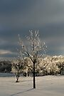 Light On Ice by Carolyn  Fletcher