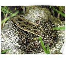 Leopard Frog Poster