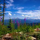 From Beauty To Beauty by Charles & Patricia   Harkins ~ Picture Oregon