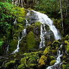 From Any Angle ~ Head Of Horse Creek ~ by Charles & Patricia   Harkins ~ Picture Oregon