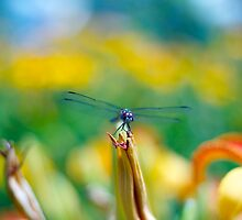 Dragonfly Tales by Marijke Welch