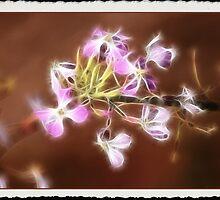 Fairy Lights: by Cherubtree