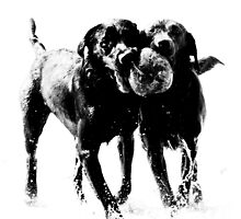 Two dogs and a coconut by Phil  Hatcher
