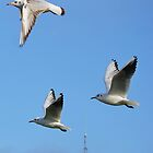Trio Of Seagulls by laurenisawesome