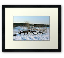 Fallen by the forces of the season Framed Print
