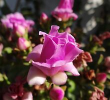 Like A Little Rose - Como Una Rosa Pequeña by Bernhard Matejka