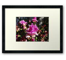 Like A Little Rose - Como Una Rosa Pequeña Framed Print