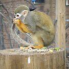 MY NUT! by LittleLivs