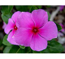 Little Pinkies Photographic Print