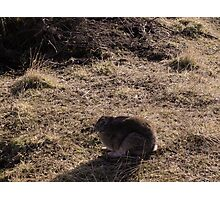 I am not really here, Usuhaia National Park Photographic Print
