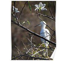 White Blossoms - Flores Blancas Poster