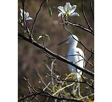 White Blossoms - Flores Blancas Photographic Print