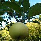 Green apple in France by katkeldeen