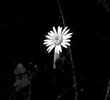 Daisy  by HopefulHarrie