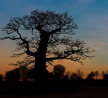 Oak Silhoette by Will Corder | Photography