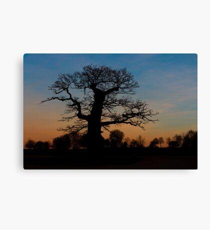 Oak Silhoette Canvas Print