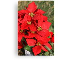 Xmas flowers Canvas Print