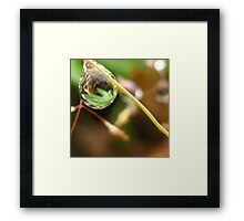 Leaf lantern Framed Print