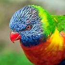 Lorikeet Portrait by Eddie Yerkish