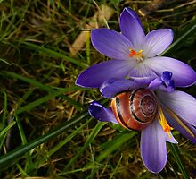 Almost Spring by Gilberte