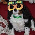 Irish Spaniel Eyes are Smiling by AnnDixon