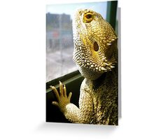 Beardies are Beautiful Greeting Card