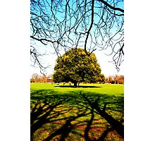 Greenwich Park - Trees & Branches Photographic Print